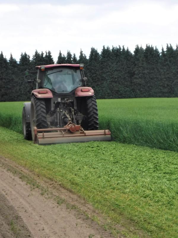 Barley 7.16.20c-600x800