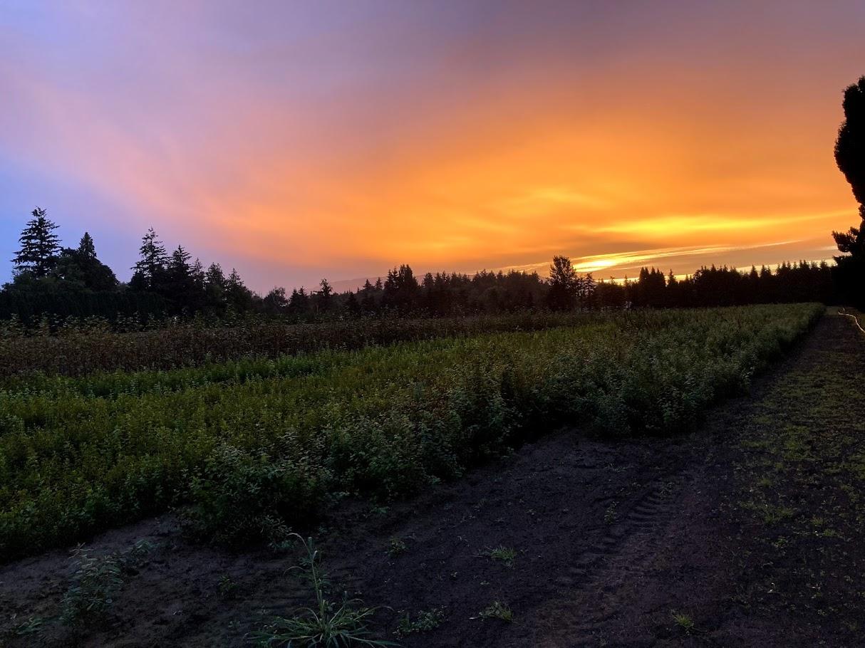 Sunrise 8.24.20