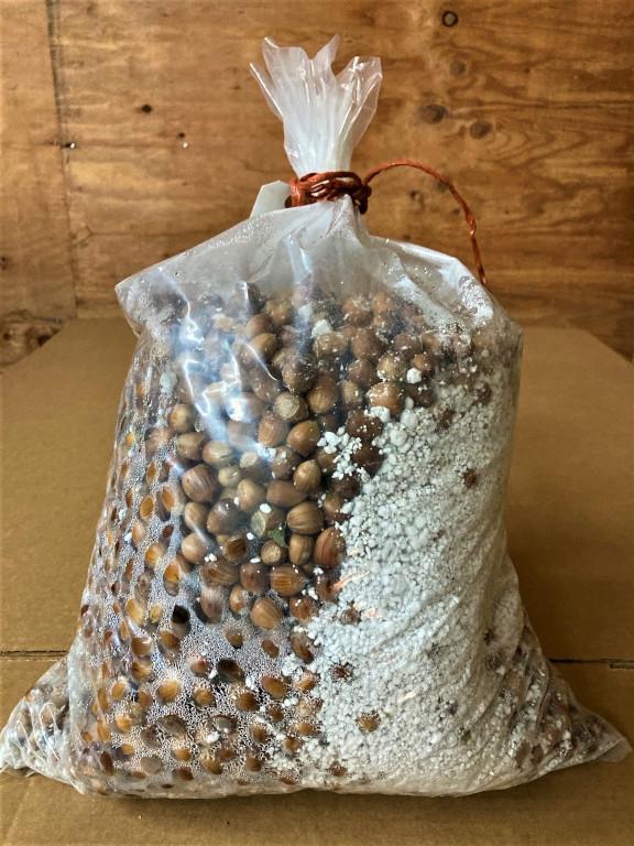 Filbert Seeds 12.3.20-768px